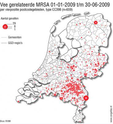 MRSA bacterie uitbraken in gebieden met veel varkens in Nederland